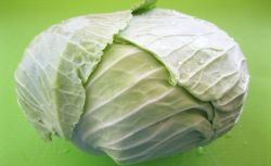 Cabbage Big Flat Head