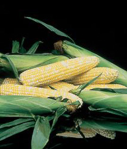 Corn Honey N Pearl