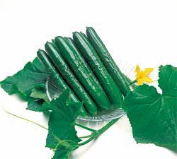 Cucumber Summer Top