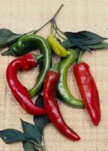 Pepper Anaheim