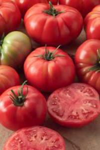 Tomato Champion II