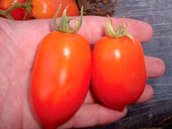 Tomato Roma Paste